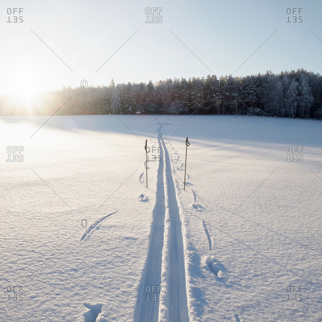 Snow covered sunlit landscape with skiing tracks and ski poles, Ural, Russia
