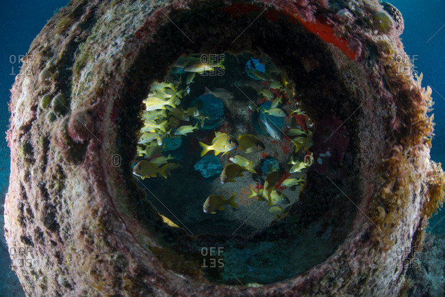 Underwater view through artificial reef of colorful fish, Cozumel Island, Mexico