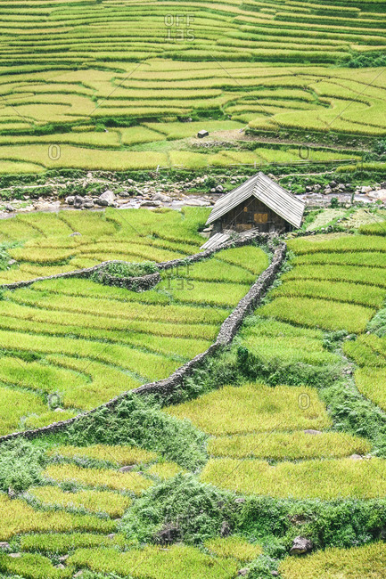 Vietnamese house surrounded by green rice paddies