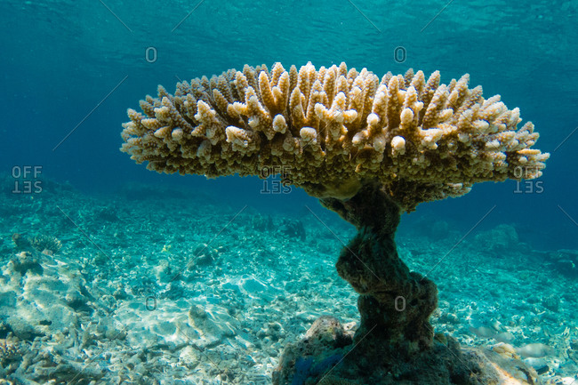 Underwater view of a coral pedestal