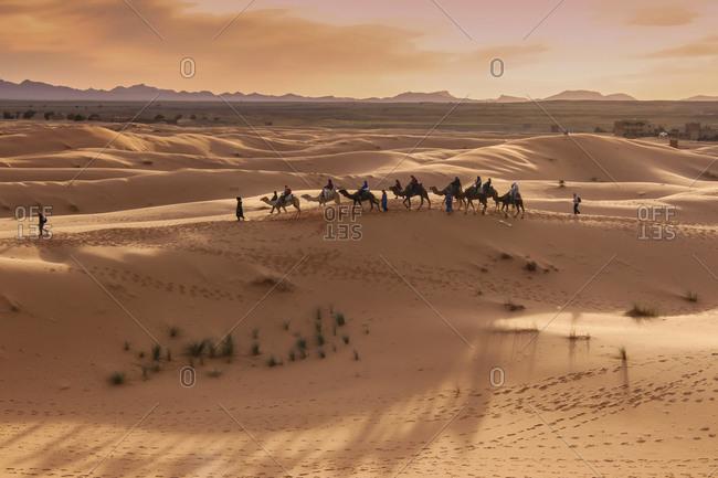 Camel Caravan at the Merzouga Desert, Eastern Sahara, Erg Chebbi Dunes (Chain of Dunes)