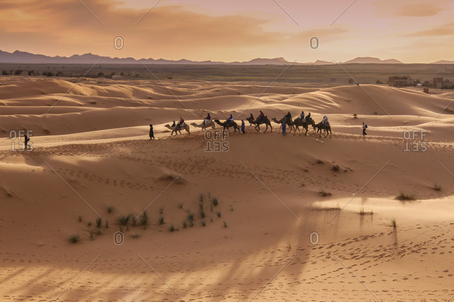 Camel Caravan at the Merzouga Desert, Eastern Sahara, Erg Chebbi Dunes (Chain of Dunes)