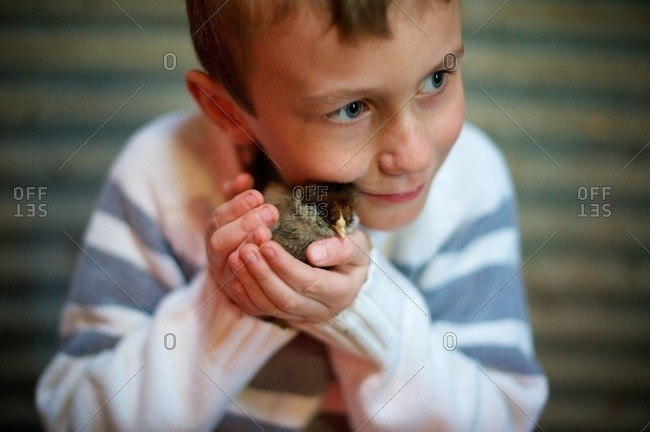 Boy nuzzling chick to face