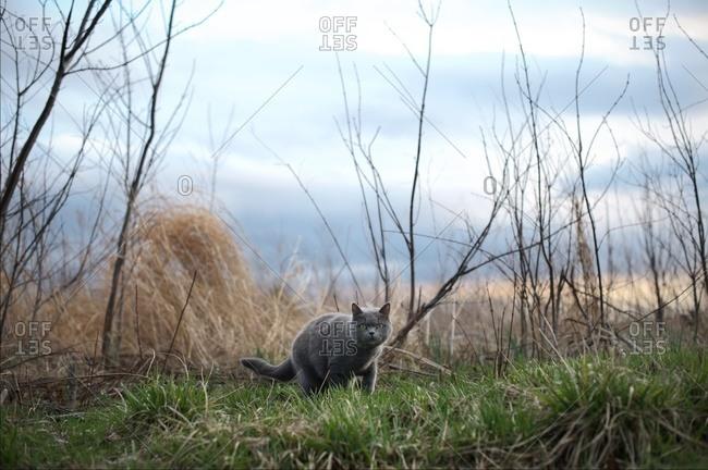 Cat wandering in a field