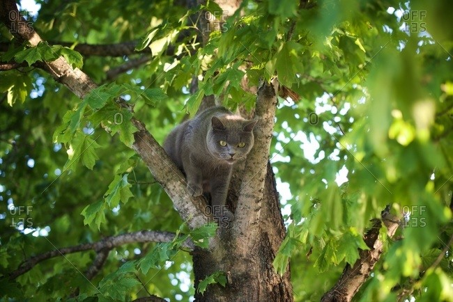 Prowling cat in tree