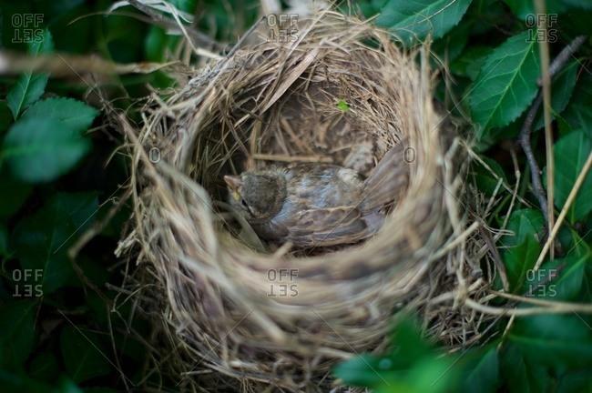 A bird inside a nest