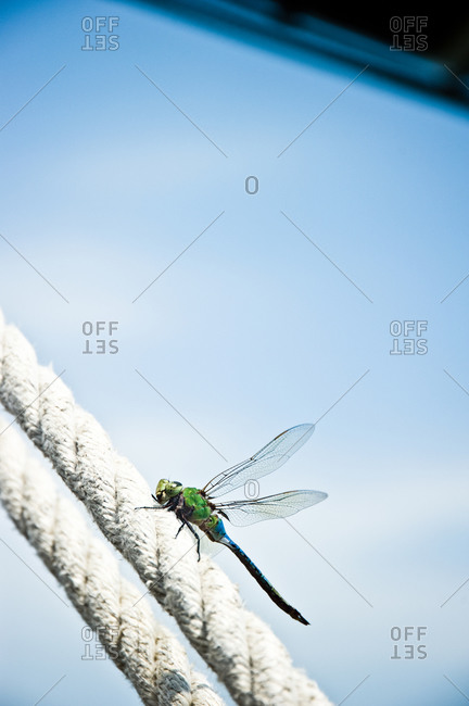 Close up of green dragonfly perched on rope