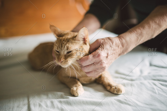 Senior woman's hands stroking tabby cat lying on bed