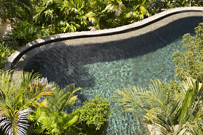 Curved pool surrounded by palm trees