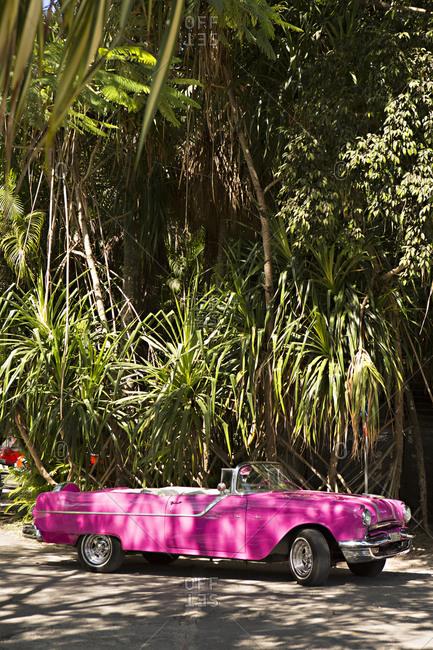San Francisco de Paula, Cuba - January 25, 2016: Pink vintage convertible car