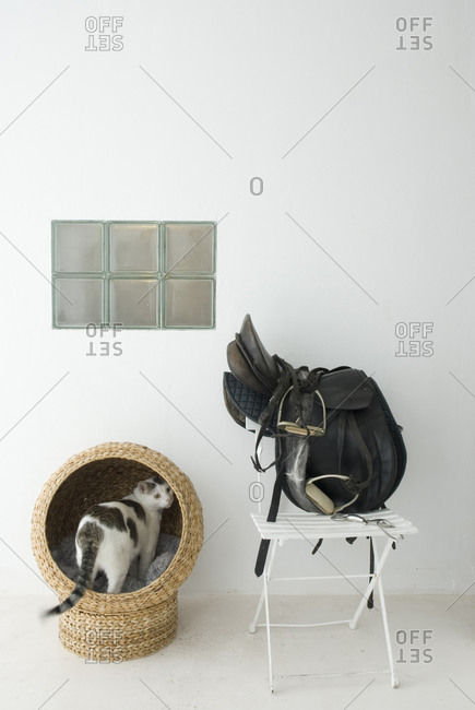 Cat in cat bed next to horse saddle