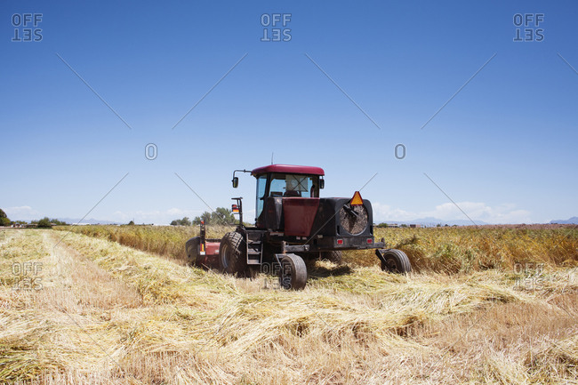 Harvester in wheat field - Offset