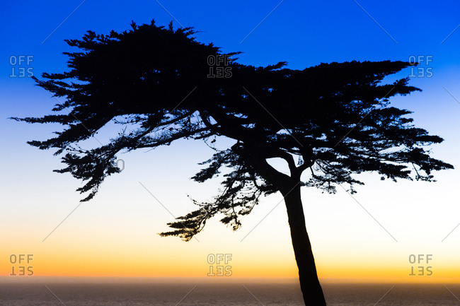 Silhouette of tree at sunset, Lands End, San Francisco, California, USA