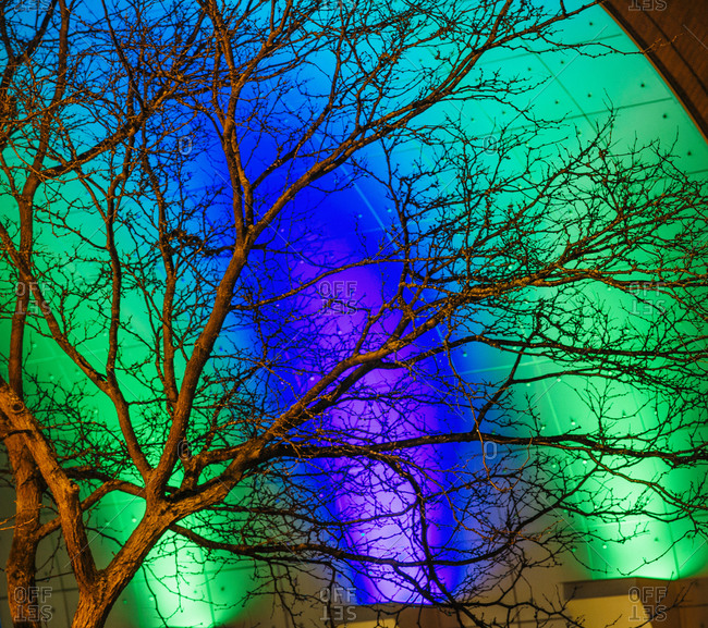 Detail of bare tree in front of green and blue illuminated building at night, Tacoma, Washington, USA