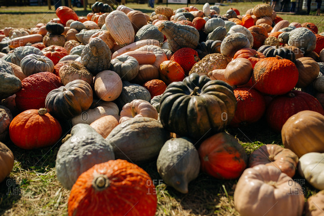 Pile of pumpkins and gourds in autumn