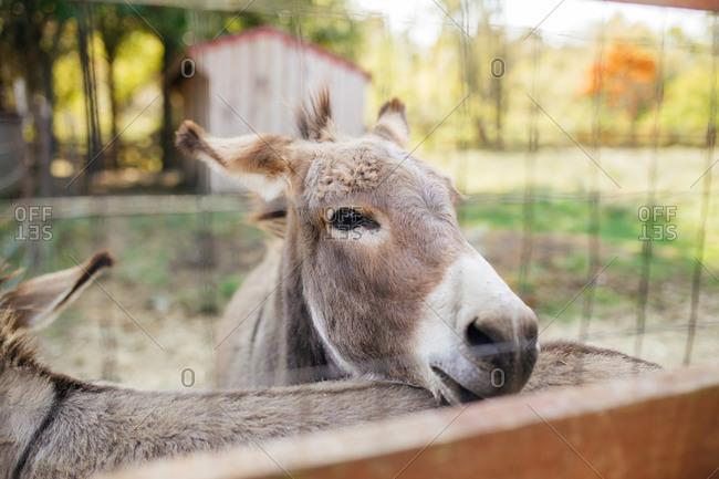 Close up of donkeys at a farm