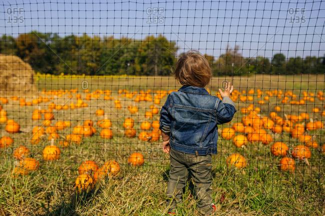 Toddler boy gazing at a field of pumpkins