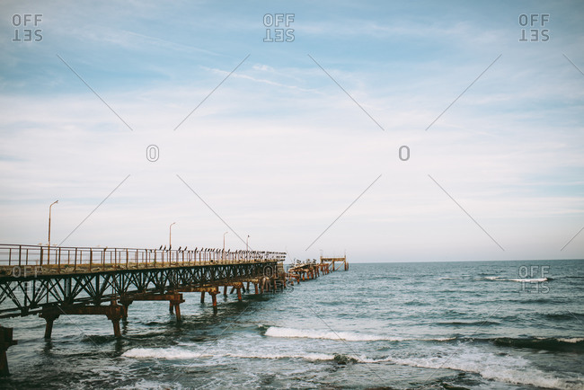 Old dilapidated pier covered in birds