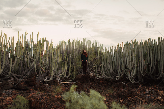 Woman overlooking desert landscape from cactus patch