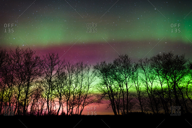 The northern lights lighting up the sky