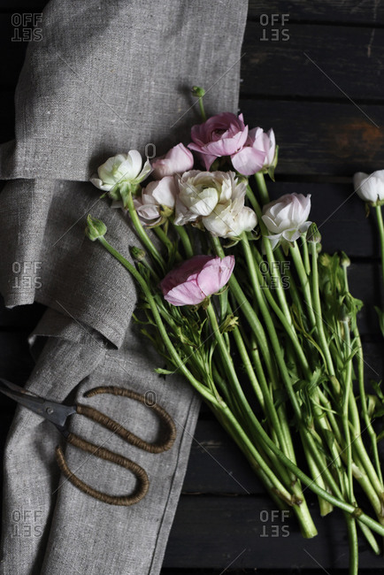 Pink and white ranunculus with scissors and tea towel