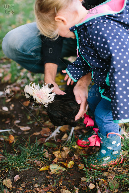 Girl tending a White-crested Black Polish rooster with her father