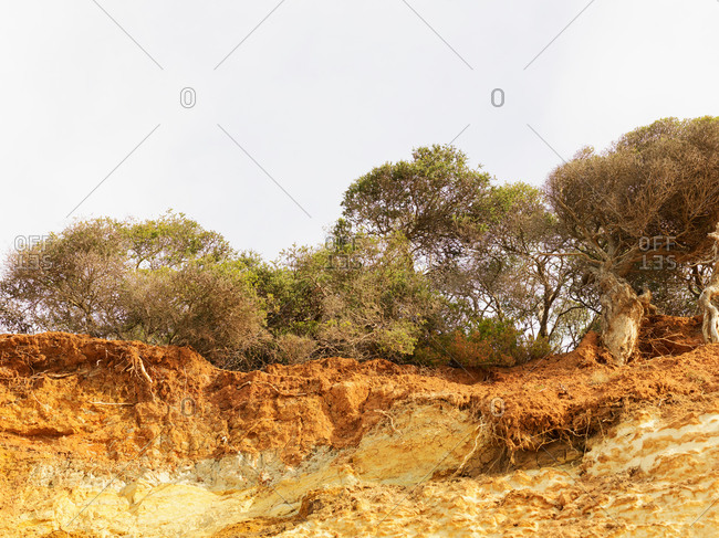 Eroded cliff and trees, Point Addis National Park, Anglesea, Australia