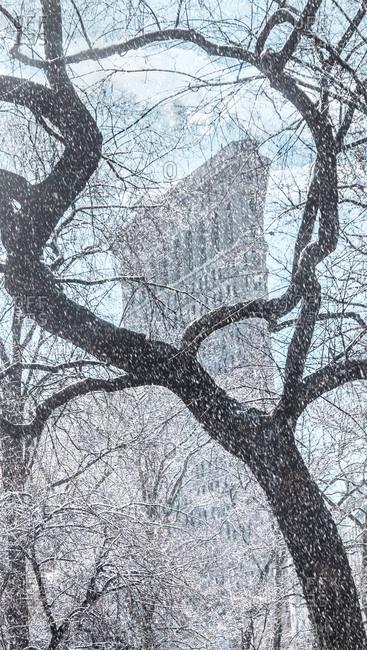 New York City, NY, USA - February 5, 2016: Tree with Flatiron Building in background