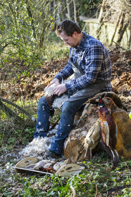 A man sitting on a tree stump plucking feathers from a game bird carcass