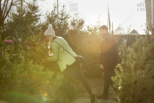 A man and woman choosing a Christmas tree