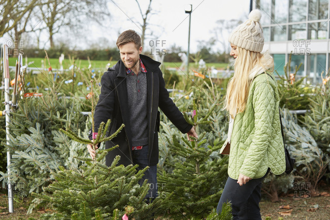 A man and woman choosing a Christmas tree from a large selection at a garden center