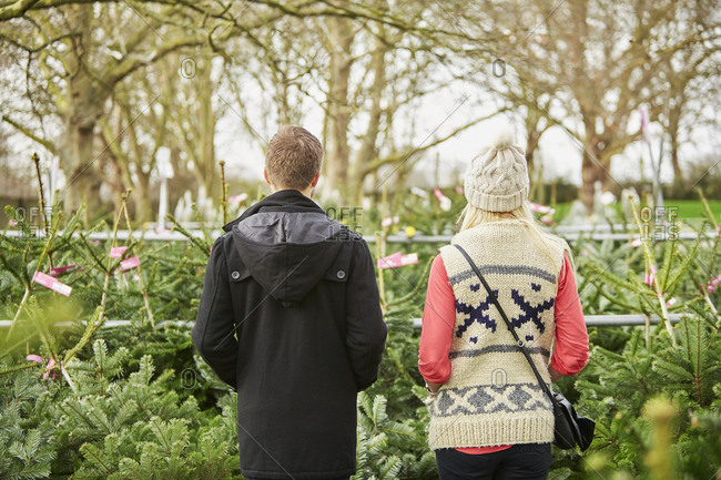 A man and woman choosing a  tree from a large selection at a Christmas tree farm