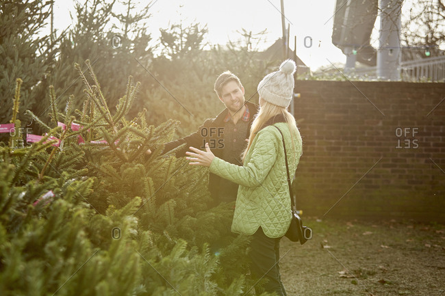 A man and woman selecting a Christmas tree