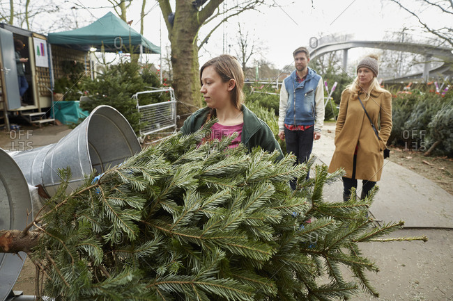 A staff member at a garden center feeding a Christmas tree into the netting machine to wrap it for the client