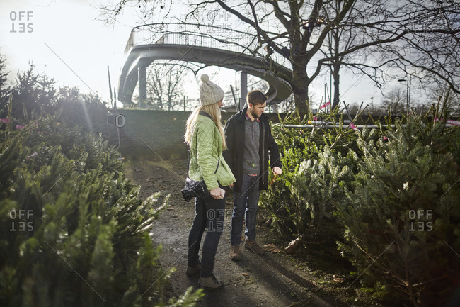 A woman choosing a Christmas tree from a large selection at a garden center
