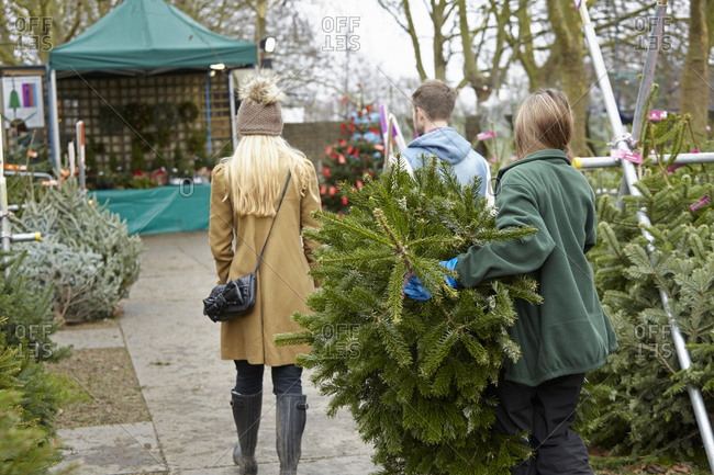 A woman shopping for a Christmas tree, choosing from a large selection