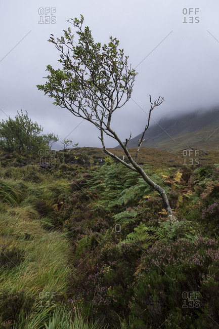 Tree on Isle of Skye, Scotland
