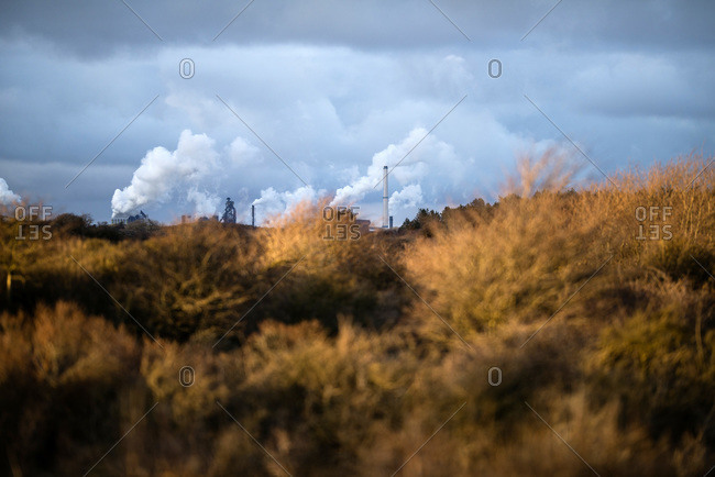 Winter bushes with industrial skyline under stormy sky, Zuid-Kennemerland National Park, The Netherlands