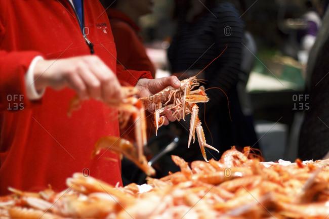 Hand selecting shrimp in market
