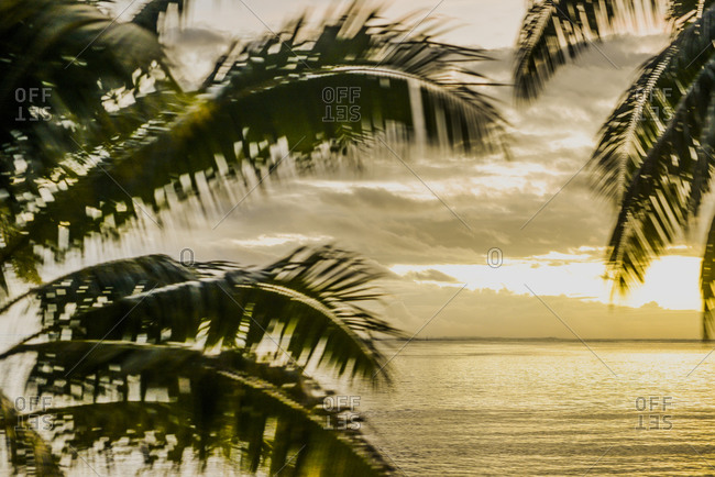 View of the ocean with palm trees blowing in the wind, Mo'orea Island, French Polynesia