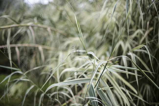 Close up of tall grass and leaves