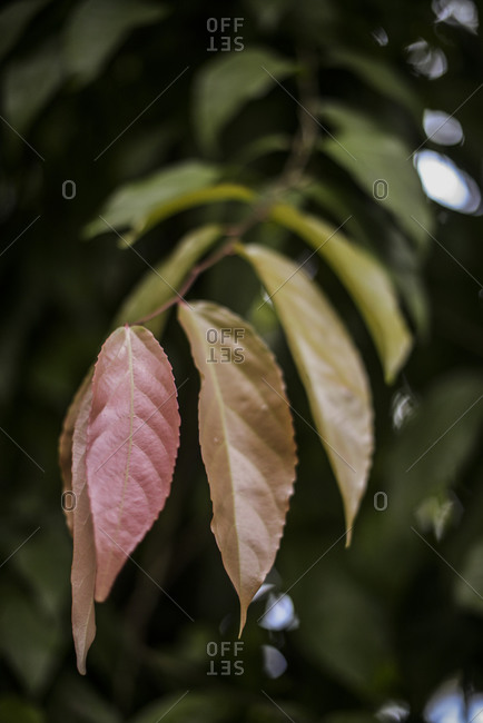 Colorful leaves on a tree branch