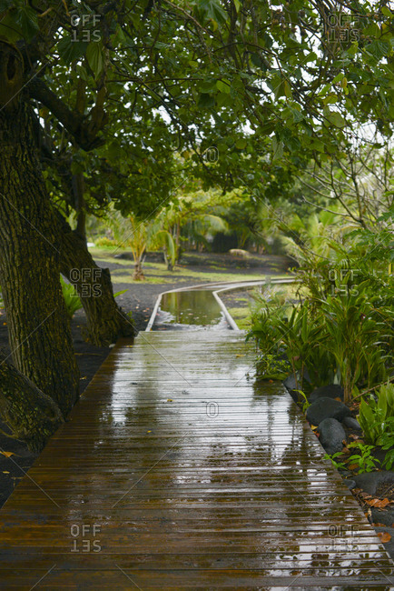 Wet tree covered walkway, Mo'orea Island, French Polynesia