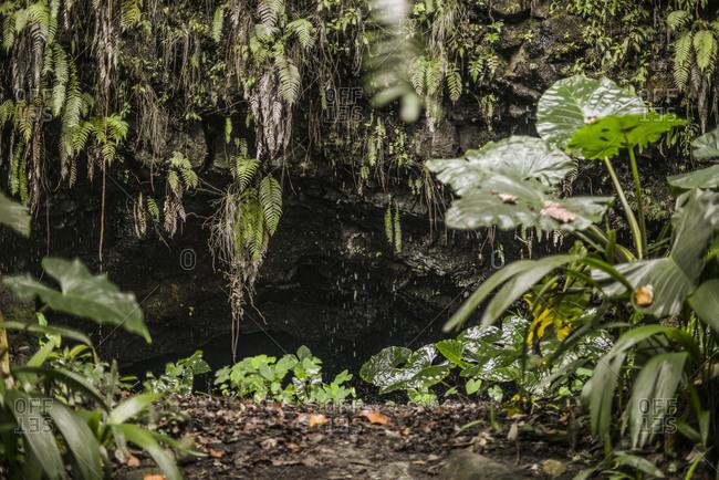 Rainy tropical cave, Mo'orea Island, French Polynesia