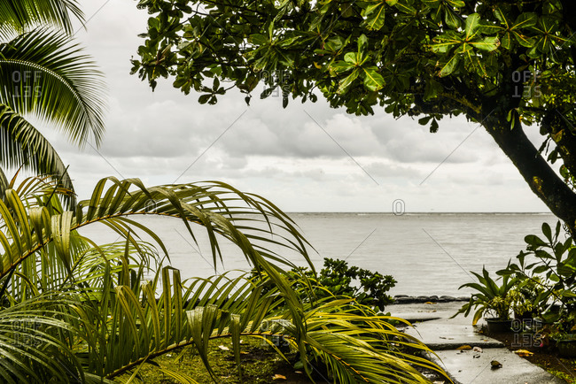 View of the ocean with palm trees from the tropical coast of Mo'orea Island, French Polynesia