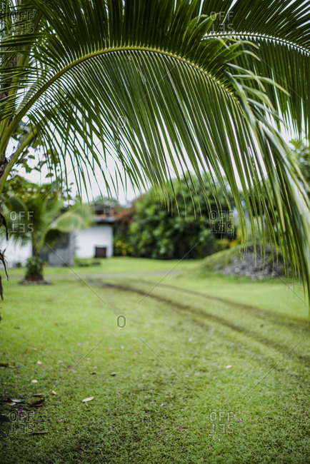 Palm tree leaves close up, Mo'orea Island, French Polynesia