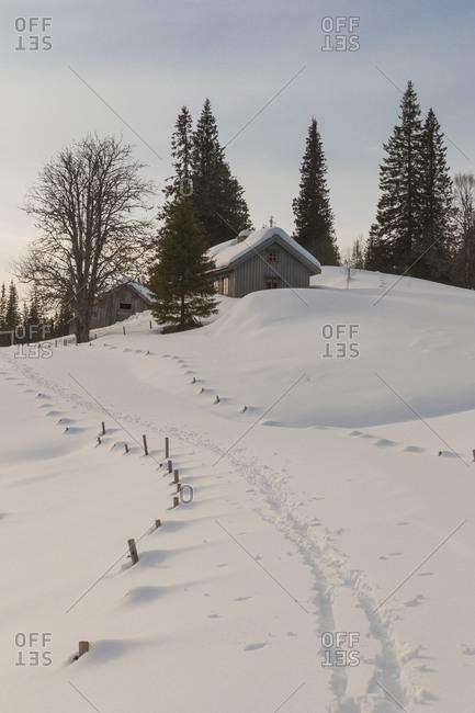 Cross-country ski tracks in the snow