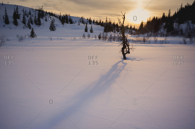 A bare tree casting a shadow across a snowy field