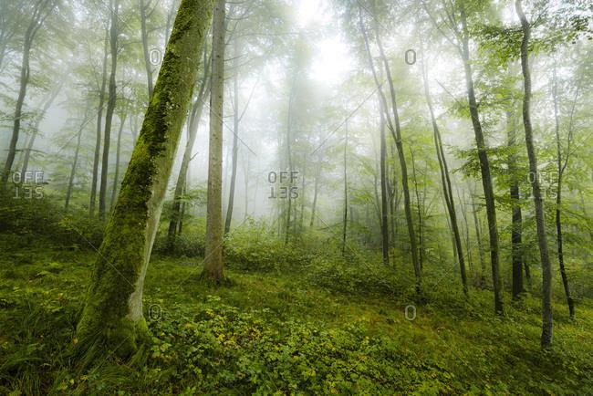 Autumnal atmosphere at Augsburg Western Woods Nature Park, Bavaria, Germany