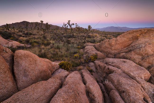 Mojave desert and Joshua, trees, California, USA